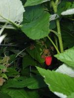 Berries blog
