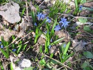 April 5 scylla