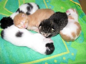 Kittens day 6